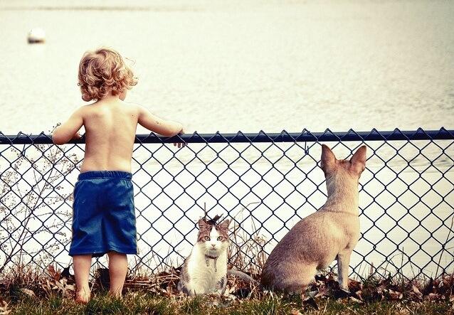 Dziecko z psem i kotem