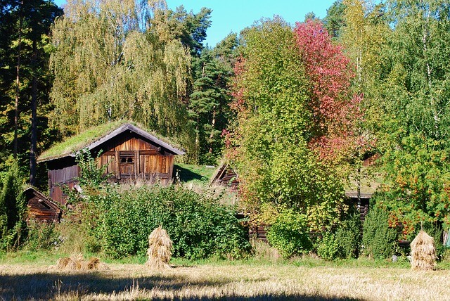 Stare gospodarstwo wśród bujnych drzew