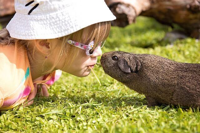 Dziewczyna i świnka morska