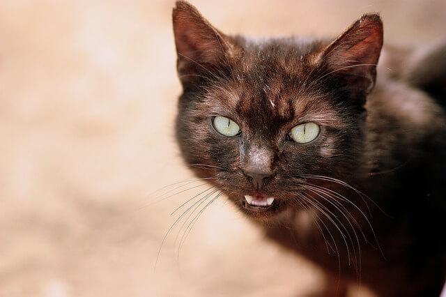 diaboliczny kot, który z pewnością coś kombinuje