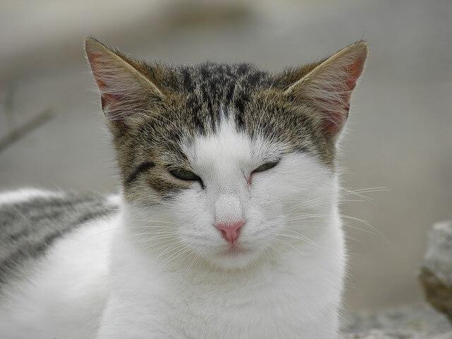 niezadowolony kot posyła krzywe spojrzenie