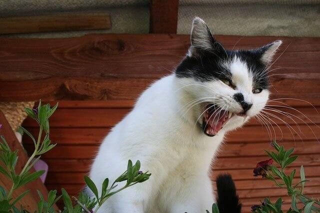 Jak wychować kota? Metody na utemperowanie kociego charakteru