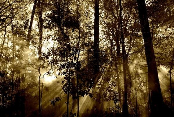 las, drzewa, lato