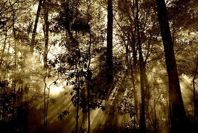 Jak określić wiek drzewa? Dowiedz się już dziś!