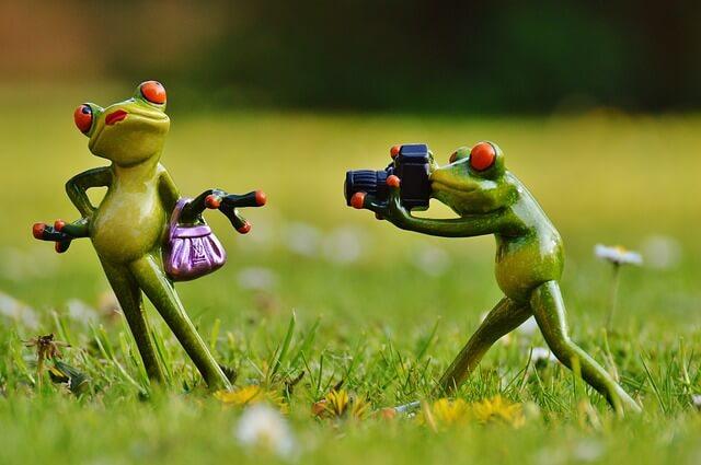 żaby robią zdjęcie
