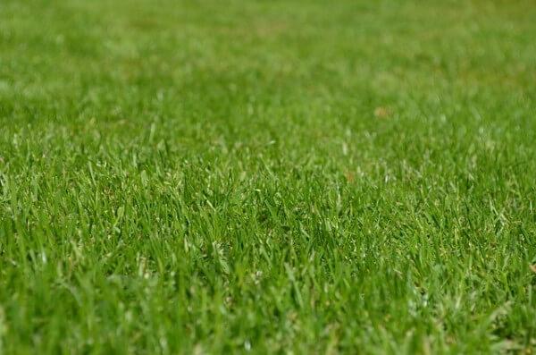 trawnik trawa
