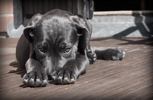 Dlaczego warto adoptować psa ze schroniska?