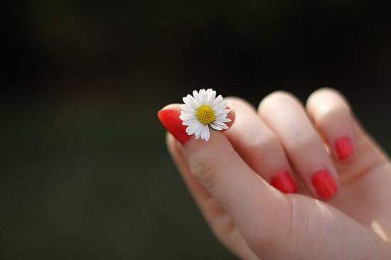 Dłoń trzymająca stokrotkę