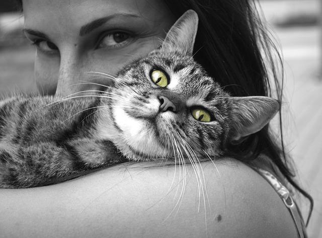 tulenie kota