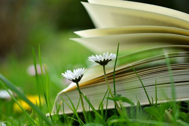 książka na świeżym powietrzu